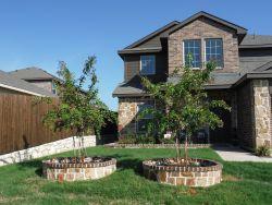 Natchez Crape Myrtles installed in tree rings by Treeland Nursery.