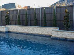 Eastern Red Cedars 'Taylor' installed between Teddy Bear Magnolias behind a pool.