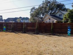 Eastern Red Cedars 'Taylor' installed along a backyard fence.